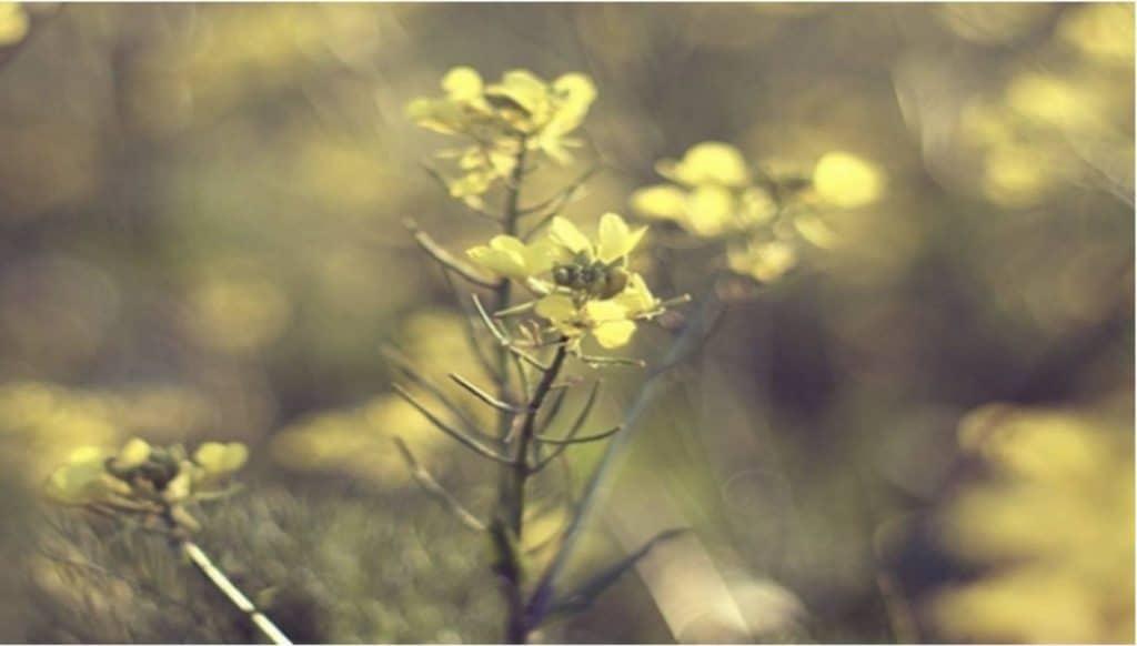 Lopen met hooikoorts: een crime of tóch mogelijk?