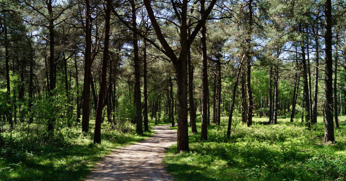 Bomen die nergens meer van opkijken